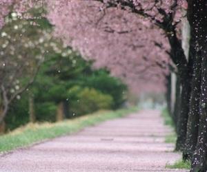 sakura, spring, and flowers image