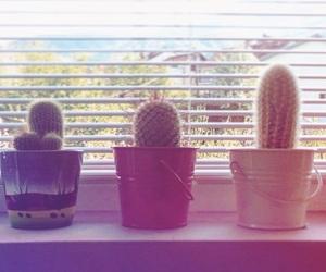 cactus, photo, and window image