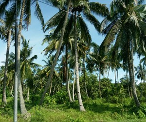 coconut, holiday, and tree image