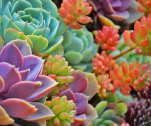 nature, plants, and succulents image