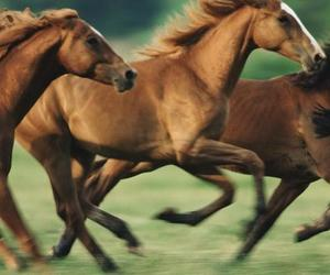 beautiful, run, and horses image