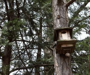 bird house, nature, and bird feeder image
