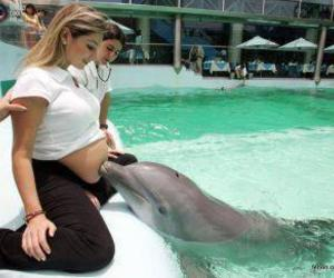 dolphin, pregnant, and woman image