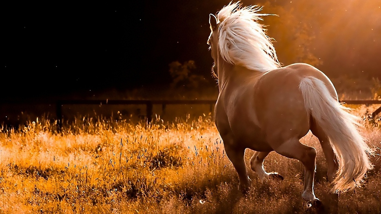 25 Images About Palomino Horse On We Heart It See More About Horse Palomino And Animal
