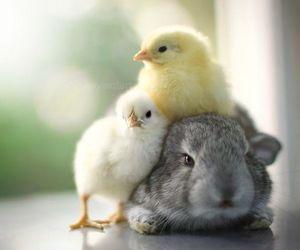 bunny, Chick, and animal image