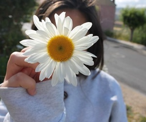 flowers, daisy, and tumblr image