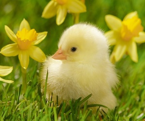 animal, flowers, and spring image