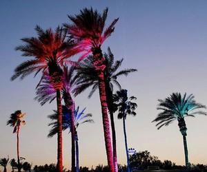 coachella, festival, and palmtrees image