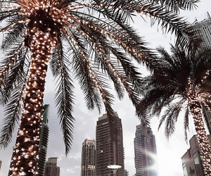 city, lights, and palms image