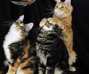 cat, pet, and funny image