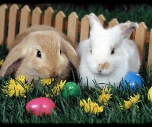 easter, bunny, and rabbit image