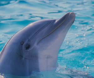 dolphin and animal image