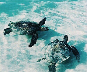 turtle, animal, and summer image