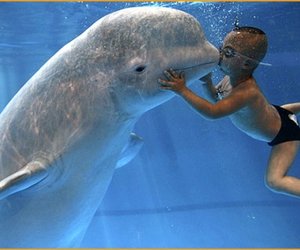 dolphin and kiss image