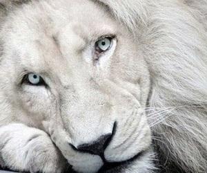 animals, white, and eyes image