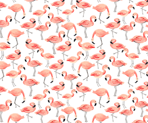 animal, background, and bird image