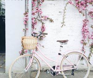 bicycle, pink, and blossom image