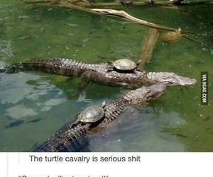 funny, turtle, and lol image