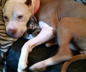 bffs, adult and baby animals, and furbbies image