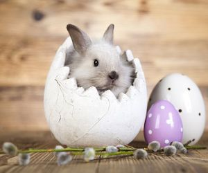 bunny, eggs, and easter pictures image
