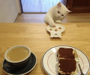 food, cat, and coffee image