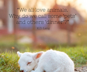 animals, pets, and quotes image