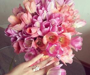 amore, fiori, and colori image