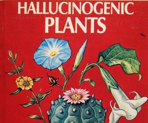 plants, drugs, and mushroom image