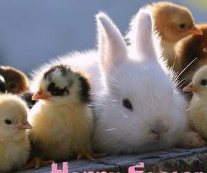 bunny, easter, and happy image