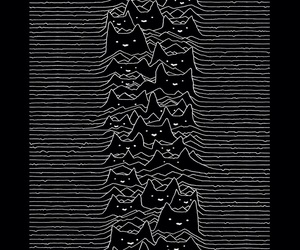 cat, joy division, and black image