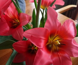 artsy, tulpe, and flower image