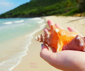Caribbean, st croix, and summer image