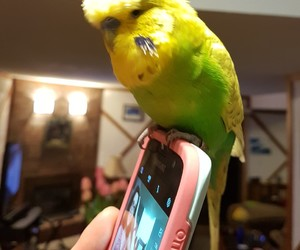 bird, budgie, and happy easter image