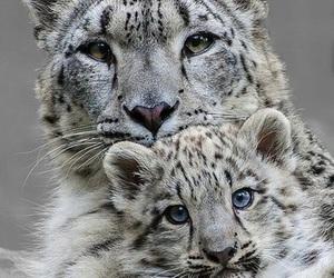 animals, eyes, and white image
