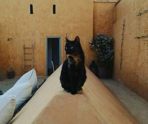 cat, Gatos, and morocco image