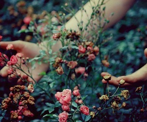 flowers, hands, and rose image