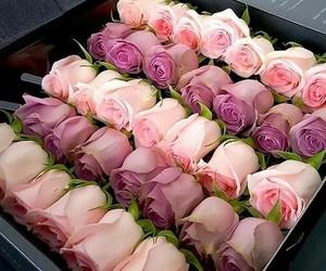 flores, rosas, and cositas lindas image