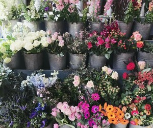 blooms and flowers image