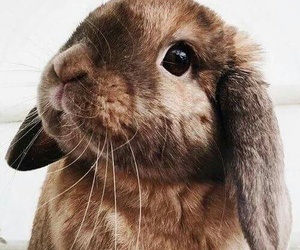 bunny, fluff, and brown+ image