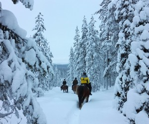 finland, frozen, and horses image