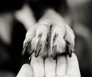 dog, animal, and hand image