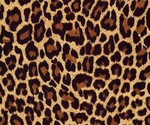 animal and wallpaper image