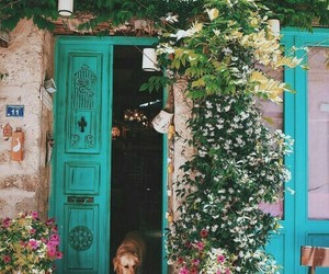 flowers, home, and nature image