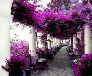 flowers, purple, and italy image