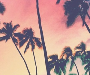 background, palm trees, and pattern image