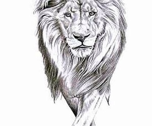 lion and sketch image