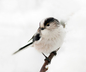 adorable, bird, and photography image