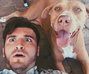 dog, zane, and cute image