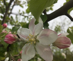spring, vibe, and appleflowers image