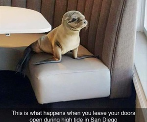 funny, lol, and seal image